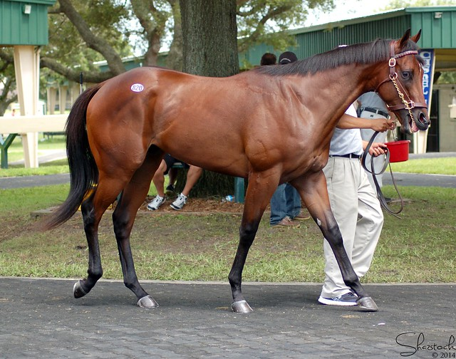 OBS June Sale '14