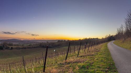 northdowns way trail walk path fields vineyard denbieswineestate surrey dorking sunset cresent moon route