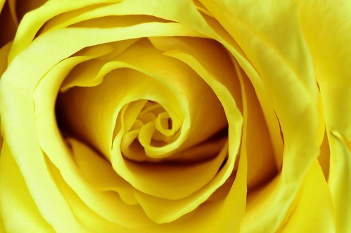 Yellow | by Steven H Scott