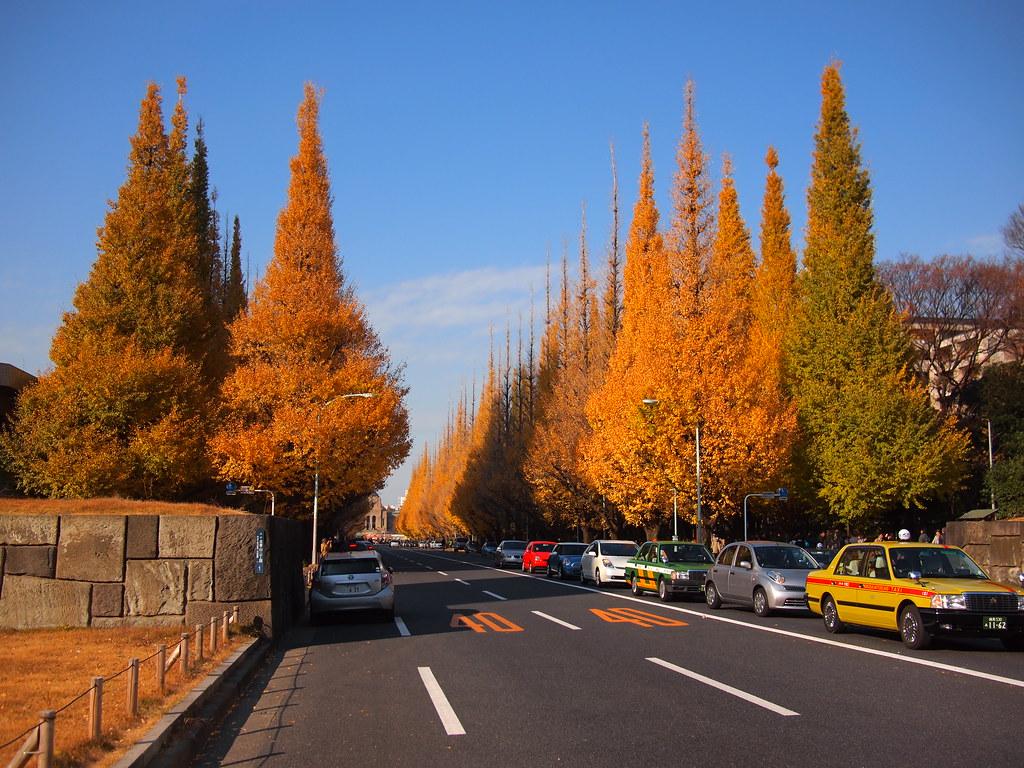 fall foliage at Icho Namiki Dori