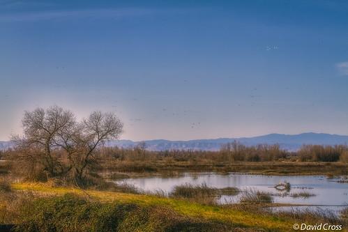 california winter birds northerncalifornia reflections landscape marsh waterfowl baretrees marshland sacramentovalley buttecounty canon70200mm28l californiacentralvalley canon7d lightroom5 topazsw graylodgepreserve