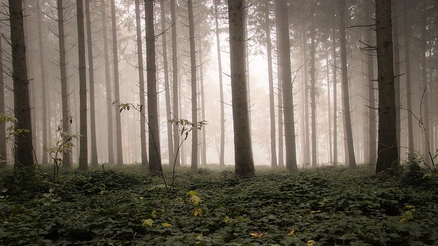 217/2016 Autumn Fog
