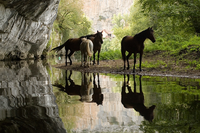 Horses chilling, Normandie, France