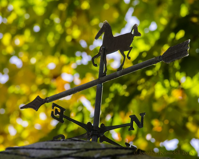 _DSC0579 foliage and weather vane on screenhouse