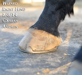 Wizard's feet: 2014 | by Rock and Racehorses