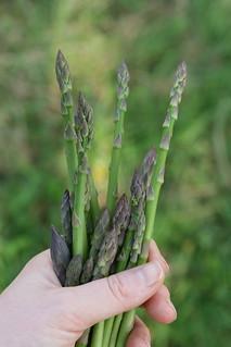 Asparagus Spring 2014   by Virtualdistortion