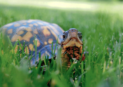 Photo of turtle in grass