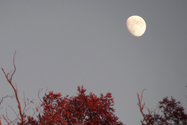 Moon over trees.