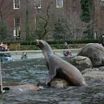 Sea lion on rock path