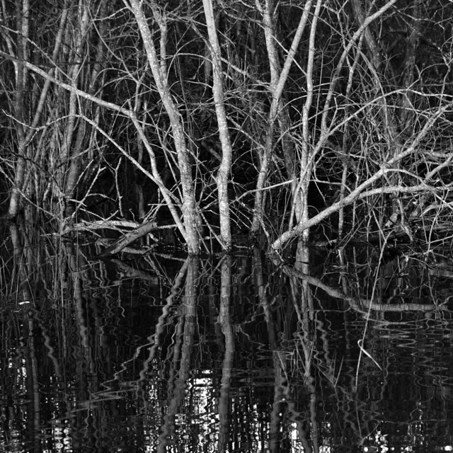 Dying wood and water
