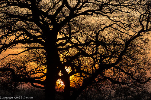 trees winter sunset orange nature yellow woods branches structure form setting eveninglight sturctural rspbotmoornaturereserve