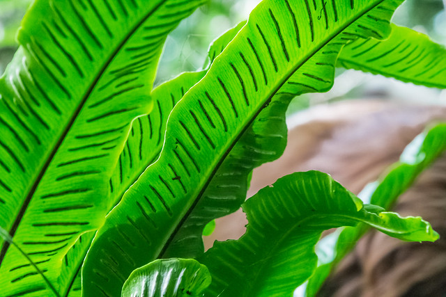 somerset rainforest