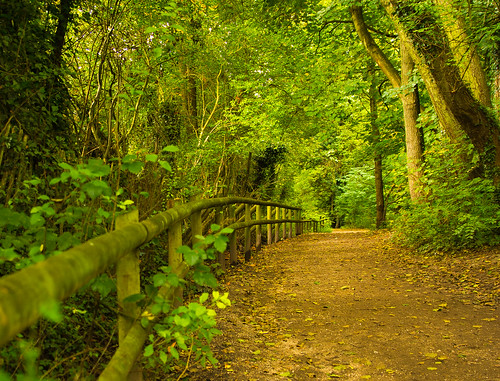 fence baggeridgecountrypark southstaffordshire westmidlands uk england 2016 autumn path tree plant shrub green outdoor landscape woodlands woods nikon d7100 tamron2470f28vc serene forest