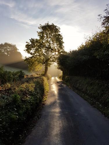 lane sunrise rays devon morning light tree