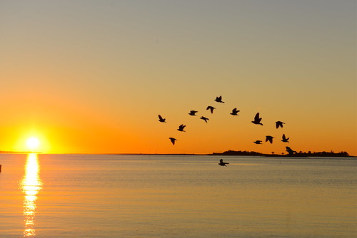 summer beach birds sunrise