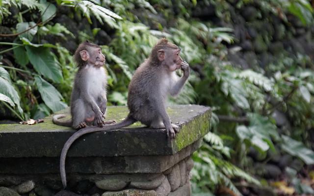 Ubud: Sacred Monkey Forest