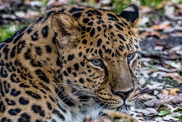 New Orleans Audubon Zoo-2