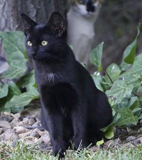 Blackie the cat.  Chelsea Stark http://www.chelseastarkphotography.com/