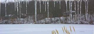 icicles   by wplynn