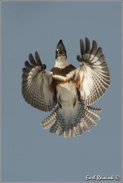 Kingfisher inbound