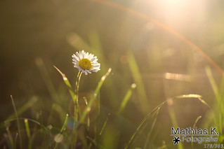 Goldene Stunde | Projekt 365 | Tag 178