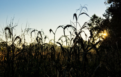 baltimore ohio unitedstates us 2016 grass plant village