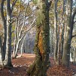 Fr, 21.10.16 - 10:13 - Im Wald