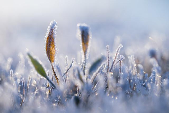 Cold feet but warm feelings inside .Sint-Maartensheide -8°C .