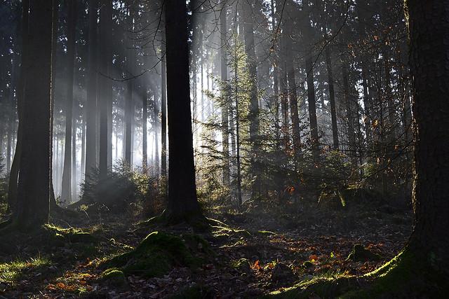 _DSC7842 Ein wunderschöner Wintertag beginnt - A beautiful winter day begins