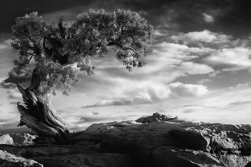 Dead Horse Point Tree (32-bit HDR B&W) | by howardignatius