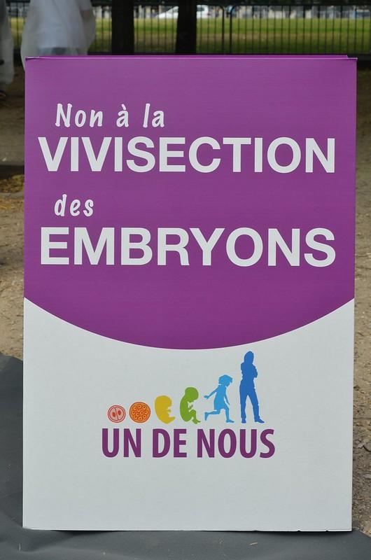 Embryon Undenous 11juillet2013-4