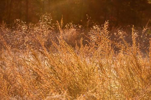 farm scenic westvirginia hayfield morningsun 18105mm romneywv nikond90