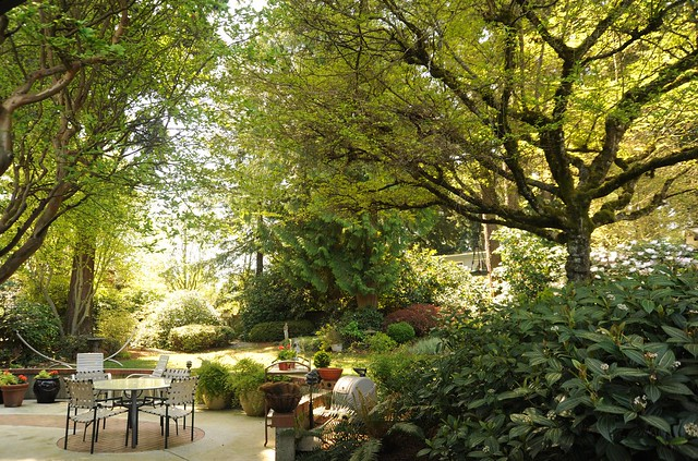 A place to relax, backyard garden, patio table and chairs, potted plants, trees, Lake Forest Park neighborhood, Seattle, Washington, USA
