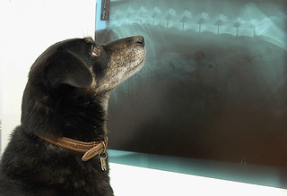dog xray   by liverpoolhls