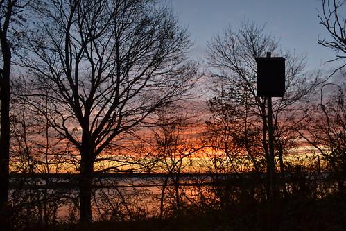 home sunrise bats