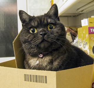 Cat in a box!!!! | by neilalderney123