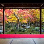 Maples @ Enkoji Temple (圓光寺) :: Kyoto (京都), Japan