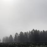 Fog of Hayden Valley