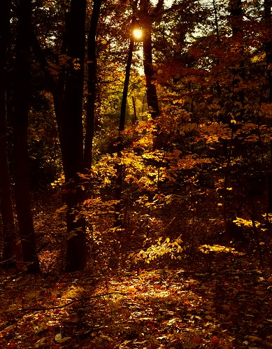 trees autumn fall sunset nature leaves roccotaco shakerheights cleveland southerlypark