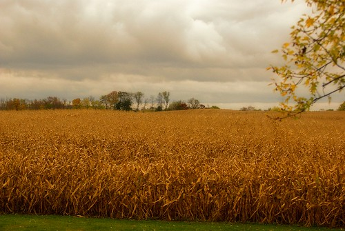autumn ohio storm cold fall field rain weather clouds corn backyard farm sony alpha a230 fairfieldcounty 2013 ruralohio stoutsville ohiofoothills