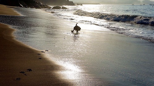 sunset dog beach paw sand lab labrador play run colorvibefilter oceanqueenhotelpelabuhanratu