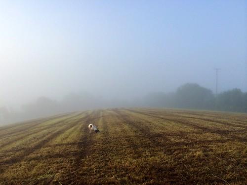 dog mist field fog walking explore spaniel springer ballymena chilidog explored ahoghill