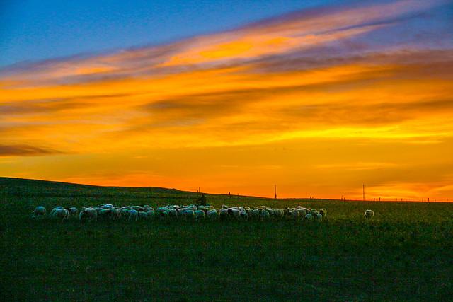 Grassland - Hothot - Inner Mongolia - China