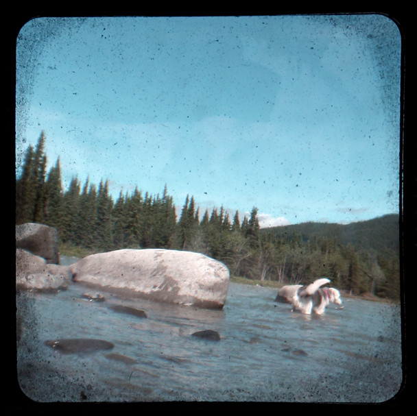 Musky Wades Nenana River