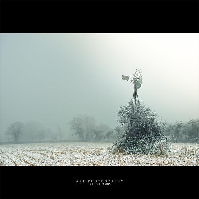 Oasis in the winter wind | Nikon Df