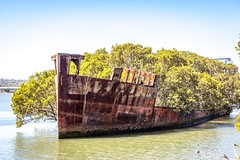 SS Ayrfield Shipwreck-12