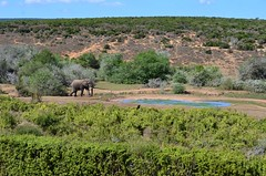 Addo-Elefanten-Nationalpark