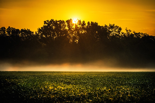 morning sun mist green yellow fog rural sunrise landscape gold glow farm country groundfog