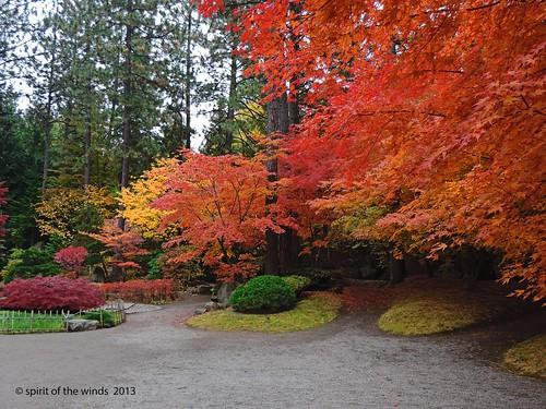 otw naturewatcher excapture japanesegardenspokane washingtonstateautumnfall