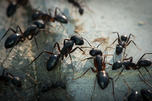 Ants Ants Ants   by siraf72